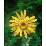 Fleurs de Californie ARNICA  7,5ml