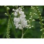 Fleurs de Californie BLACK COHOSH  7,5ml