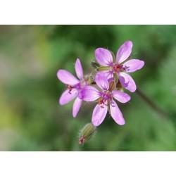 Fleurs de Californie Filaree 7,5 ml