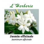 JASMIN OFF FLEURS 100GR Jasminum officinalis
