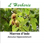 MARRON D INDE  100GR Aesculus hippocastanum