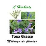 Toux Grasse Mélange de Plantes 100 gr