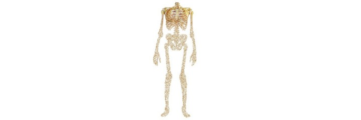 Capital osseux