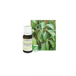 HE CANNELIER DE CHINE BIO (Cinnamomum cassia) 10ml PRANAROM