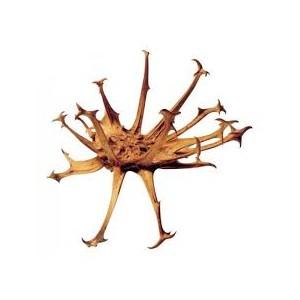 https://www.lherberie.com/2354-thickbox/griffe-du-diable-100gr-harpagophytum.jpg