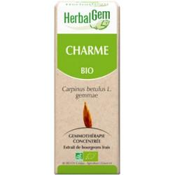 Macerat de Charme (Carpinus betulus) BIO, bourgeon, Herbalgem