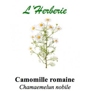 https://www.lherberie.com/2801-thickbox/camomille-romaine-fl-ent-100gr.jpg