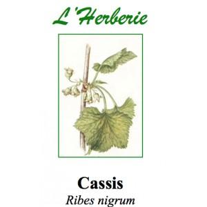 https://www.lherberie.com/2803-thickbox/cassis-feuilles-100gr.jpg
