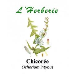 CHICOREE RACINE 100GR