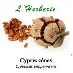 CYPRES CÔNES 100 gr