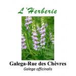 Galega-Rue des Chèvres Galega officinalis 100 gr