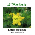 LOTIER CORNICULE COUPE 100 GR Lotus corniculatus