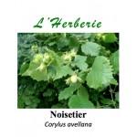 Noisetier feuilles 100 gr Corylus avellana