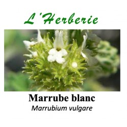 Marrube Blanc 100 gr Marrubium vulgare