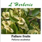 Paliure fruits 100 gr Paliurus aculeatus