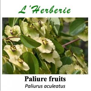 https://www.lherberie.com/5773-thickbox/paliure-fruits-100-gr-paliurus-aculeatus.jpg