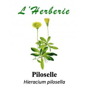 https://www.lherberie.com/5783-thickbox/piloselle-100gr.jpg