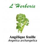 Angélique feuille 100gr Angelica archangelica