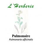 Pulmonaire  Pulmonaria officinalis 100gr